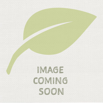 Potted Buxus Ball. 25cm Contemporary Driftwood Effect Planter.